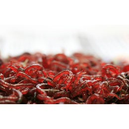 Larva Roja 45 ml