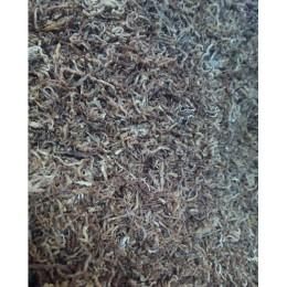 Larva de mosquito Liofilizado 25 Gr