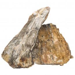 Roca Fósil