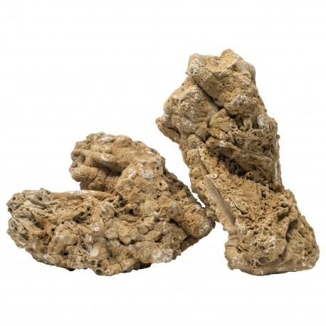 Roca Salomon