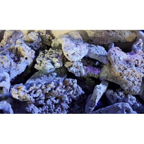 Roca de coral