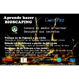 Workshop Comipez Littletree