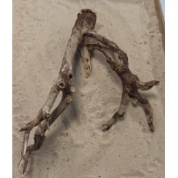 Mangle root 5467