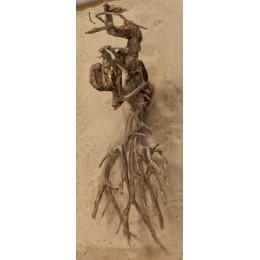 Mangle root 7734