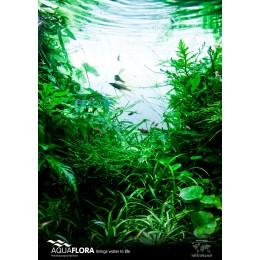 Poster Aquaflora 'Go Green!