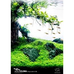 Poster Aquaflora 'Tree Scape'