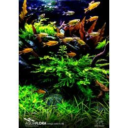Poster Aquaflora 'Wild Nature'